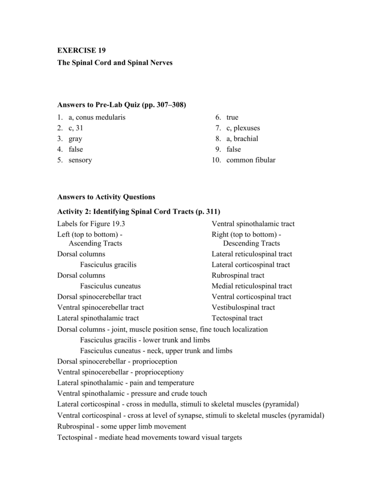 activity 2 anatomy and physiology lab manual exercise 19